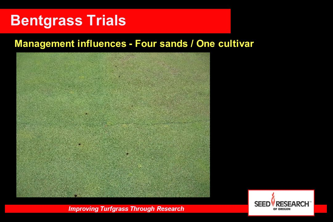 Improving Turfgrass Through Research Kentucky Bluegrass Types NJ Wear - Spring, summer and fall wear (multi - use field) High performersLow performers CompactAmerica MidnightBVMG JuliaCheri AggressiveCommon Mid-Atlantic Repeat with wear, compaction different seasons