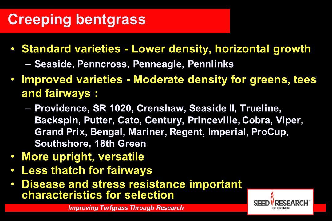 Improving Turfgrass Through Research Shamrock Type SR 2100Champagne AtlantisParkland ShamrockChamplain BrooklawnMoonshine LakeshoreDurham Mongoose