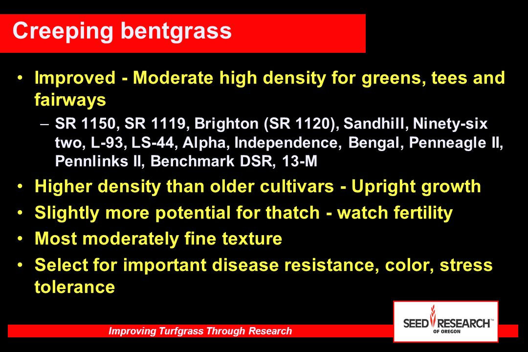 Improving Turfgrass Through Research Versatile varieties - High Density for greens, tees and fairways –007 (DSB), MacKenzie, Memorial, Kingpin High density but with upright growth so more versatile Low tendency for Bentgrass Bloat - scalping Slightly greater thatch management needs Low Poa annua invasion May be combined with Ultra for greens or improved types in fairway blends Creeping bentgrass