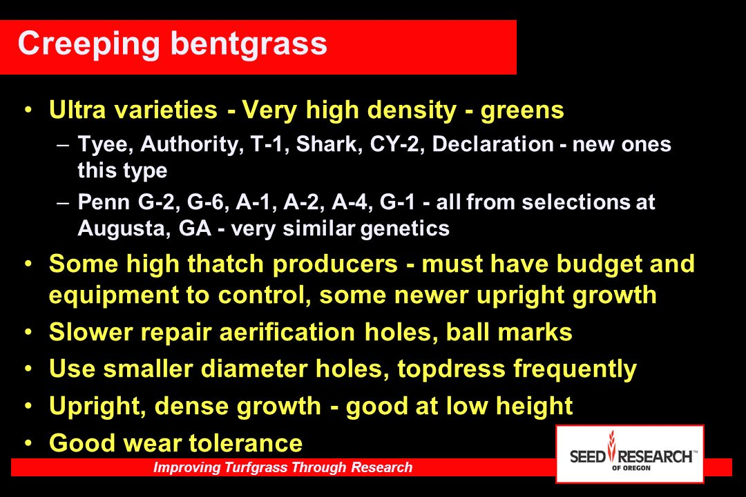 Improving Turfgrass Through Research Quality ratings of Creeping Bentgrass cultivars grown on a green at 10 locations using an 1/8 inch (3.2 mm) or lower cutting height 2003 NTEP – Putting Green 2005 Data Turfgrass Quality ratings 1-9, 9 = Ideal Turf CultivarQuality Declaration6.8Memorial6.4 MacKenzie6.7T-16.3 Authority6.7Benchmark DSR6.2 Tyee (SRX 1GD)6.6Alpha6.0 CY-26.6Pennlinks II5.5 Penn A-16.5Penncross5.0 007 (DSB)6.5 Kingpin6.4 LSD @ 5%0.2 MacKenzie creeping bentgrass