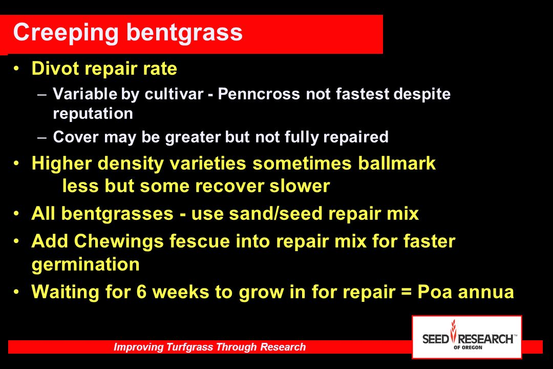 Improving Turfgrass Through Research America Type Characteristics of compact type Finer leaf, higher density Some with better rhizomes Better fall and spring growth Moderate Summer recovery High Summer Patch resistance Resistant to powdery mildew Good in shade - should be in Fairway mixes