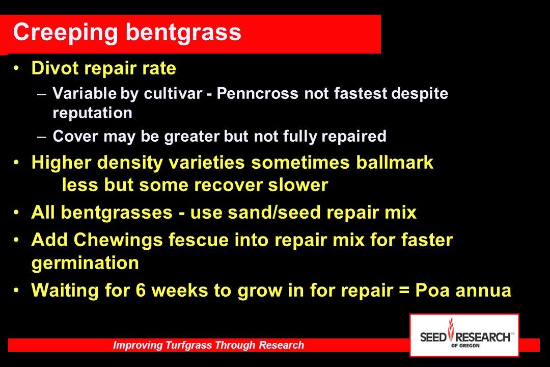 Improving Turfgrass Through Research Brown patch ratings of Creeping Bentgrass cultivars on a green at Blacksburg, VA.