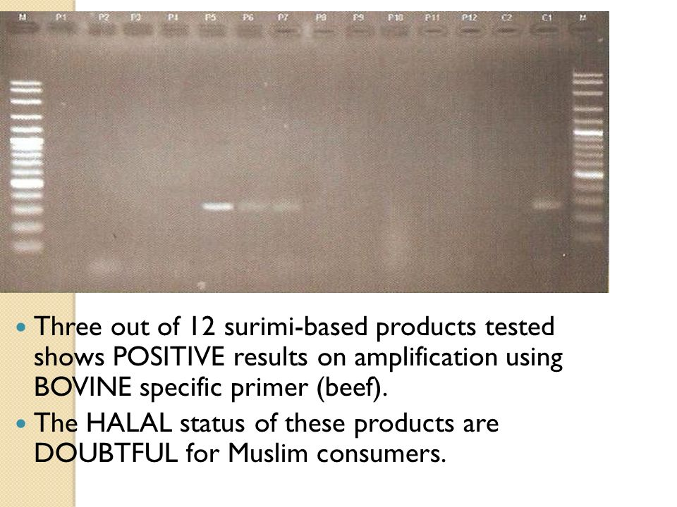 Three out of 12 surimi-based products tested shows POSITIVE results on amplification using BOVINE specific primer (beef). The HALAL status of these pr