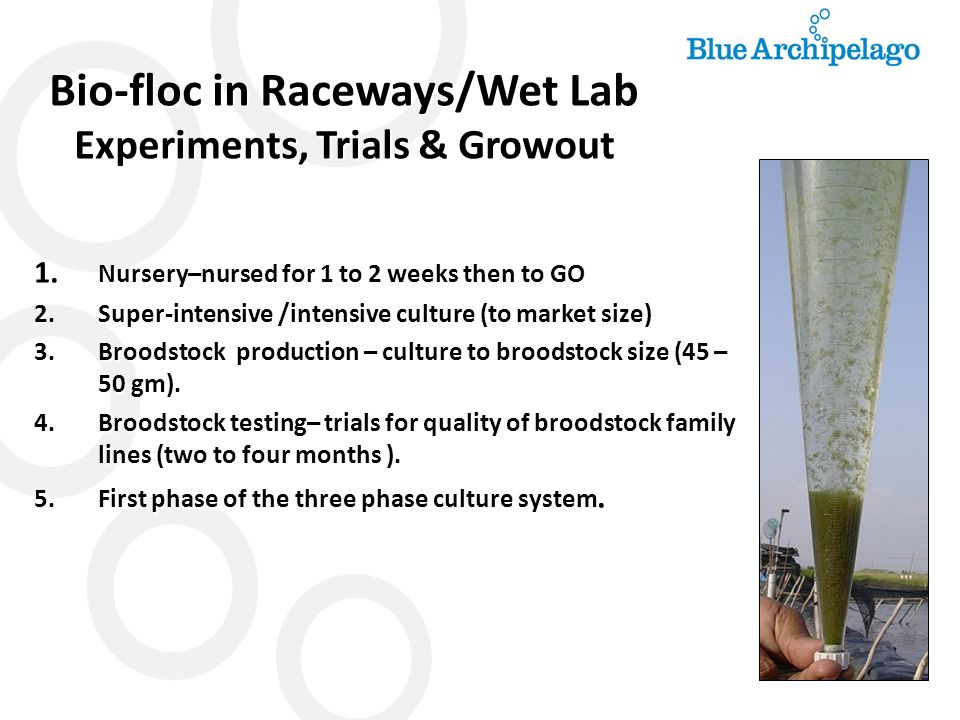 Bio-floc in Raceways/Wet Lab Experiments, Trials & Growout 1. Nursery–nursed for 1 to 2 weeks then to GO 2.Super-intensive /intensive culture (to mark