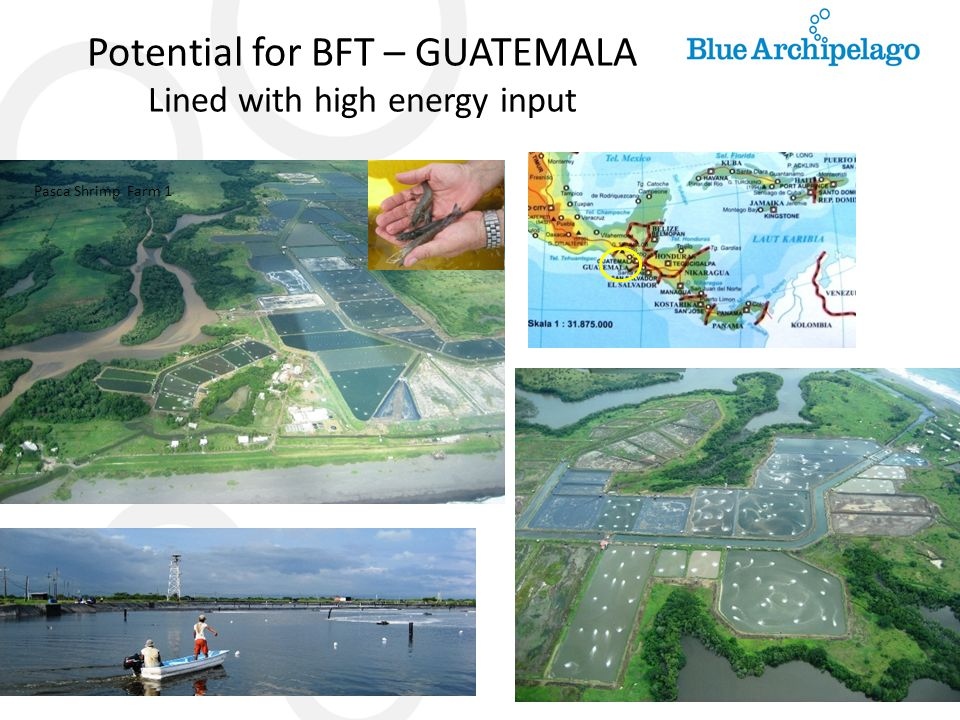 Potential for BFT – GUATEMALA Lined with high energy input Pasca Shrimp Farm 1
