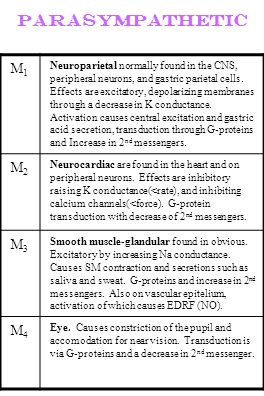 Parasympathetic M1M1 Neuroparietal normally found in the CNS, peripheral neurons, and gastric parietal cells. Effects are excitatory, depolarizing mem