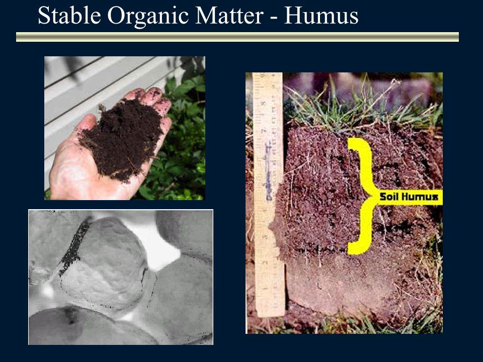 Stable Organic Matter - Humus