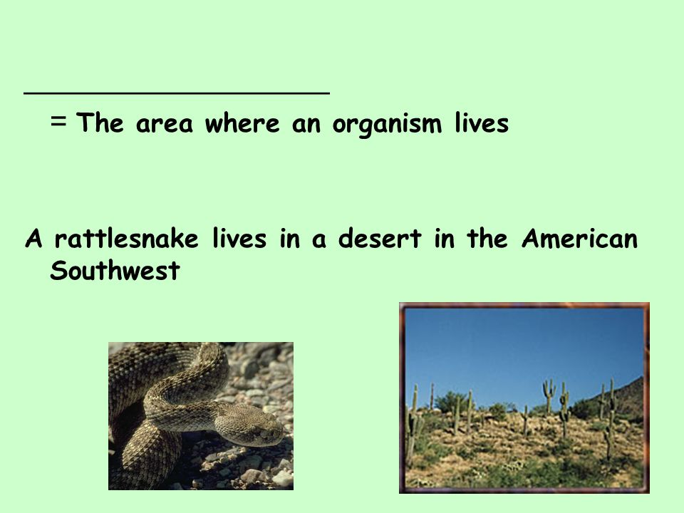 __________________ = The area where an organism lives A rattlesnake lives in a desert in the American Southwest