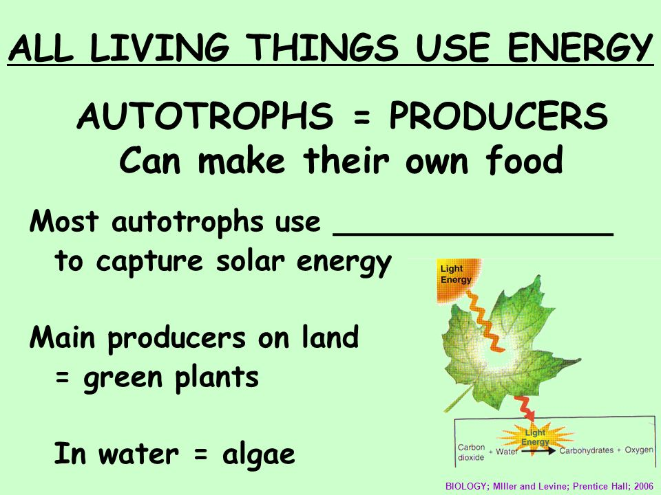 AUTOTROPHS = PRODUCERS Can make their own food Most autotrophs use _______________ to capture solar energy Main producers on land = green plants In wa