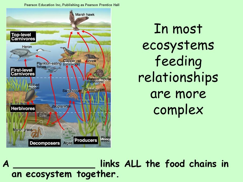 In most ecosystems feeding relationships are more complex A ______________ links ALL the food chains in an ecosystem together. Pearson Education Inc,