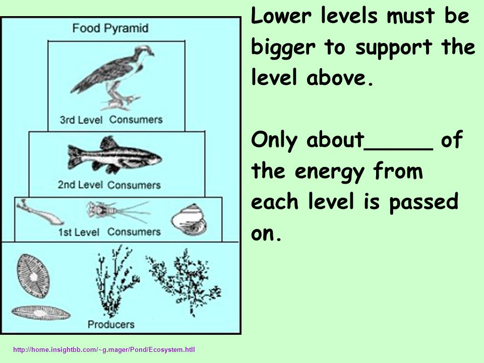 Lower levels must be bigger to support the level above. Only about_____ of the energy from each level is passed on. http://home.insightbb.com/~g.mager