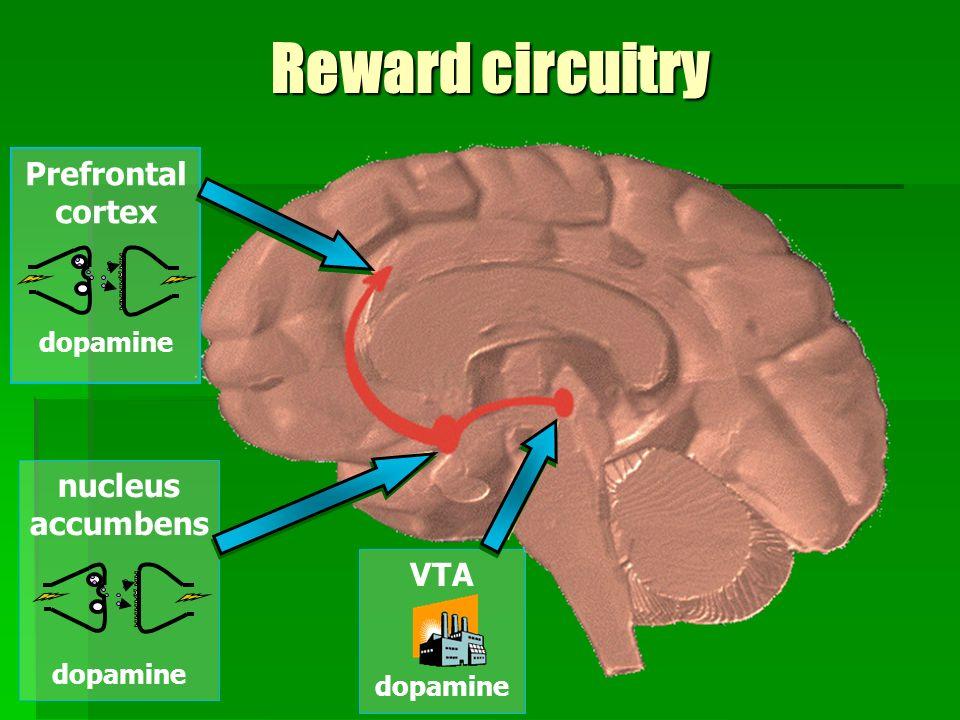 Reward circuitry Prefrontal cortex dopamine nucleus accumbens dopamine VTA dopamine