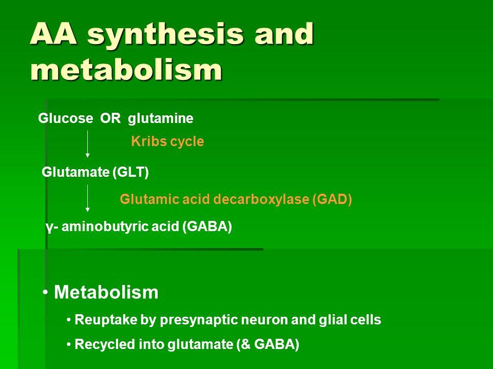 AA synthesis and metabolism Glucose OR glutamine Glutamate (GLT) γ- aminobutyric acid (GABA) Glutamic acid decarboxylase (GAD) Kribs cycle Metabolism