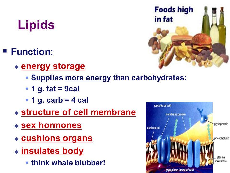 2003-2004 Lipids Examples fats oils waxes hormones steroids sex hormones testosterone (male) estrogen (female)