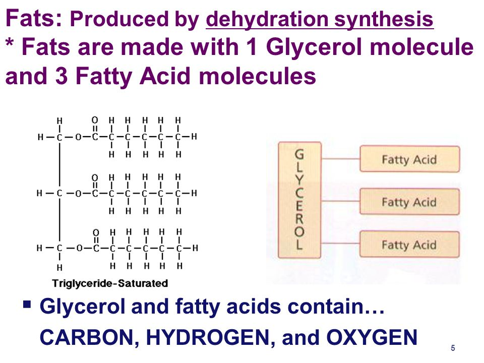 2003-2004 Structure of Fat not a chain (polymer) = just a big fat molecule