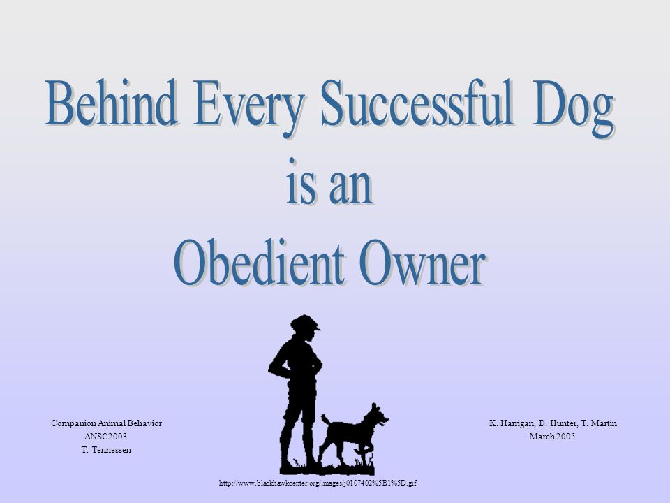 Introduction 70% of surrendered dogs with behaviour related problems are euthanized the leading cause of mortality in dogs is due to behavioural problems (4) owners may inadvertently reinforce unwanted behaviour (5) Behaviour problems are one of the most common reasons pet owners give up their dogs.