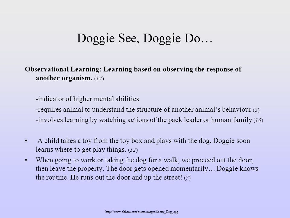 -involves recalling images of the owners activities -causes dog to interact with things that symbolize the owner and imitate the owners behaviour When we return home, we shower the dog with affection.
