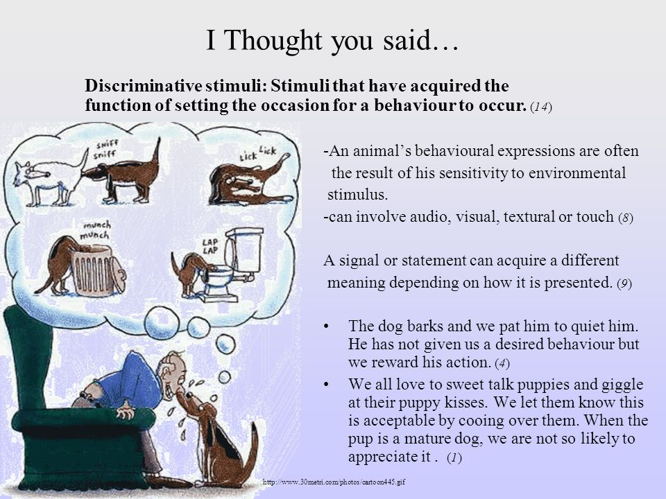 I Thought you said… -An animals behavioural expressions are often the result of his sensitivity to environmental stimulus. -can involve audio, visual,