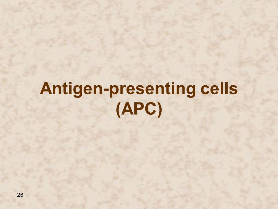 26 Antigen-presenting cells (APC)