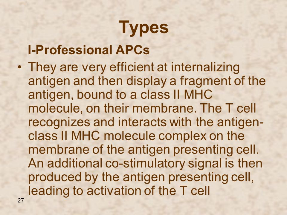 27 Types I-Professional APCs They are very efficient at internalizing antigen and then display a fragment of the antigen, bound to a class II MHC mole