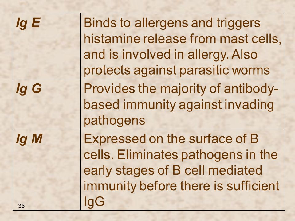 35 Binds to allergens and triggers histamine release from mast cells, and is involved in allergy. Also protects against parasitic worms Ig E Provides