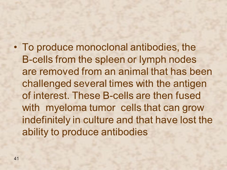 41 To produce monoclonal antibodies, the B-cells from the spleen or lymph nodes are removed from an animal that has been challenged several times with