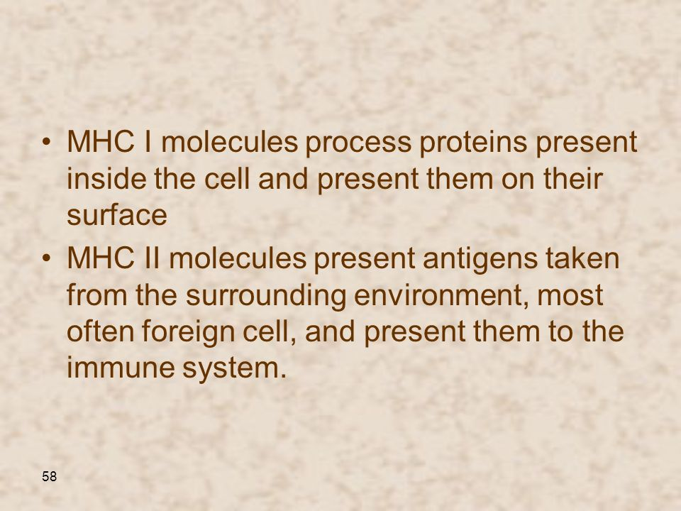 58 MHC I molecules process proteins present inside the cell and present them on their surface MHC II molecules present antigens taken from the surroun