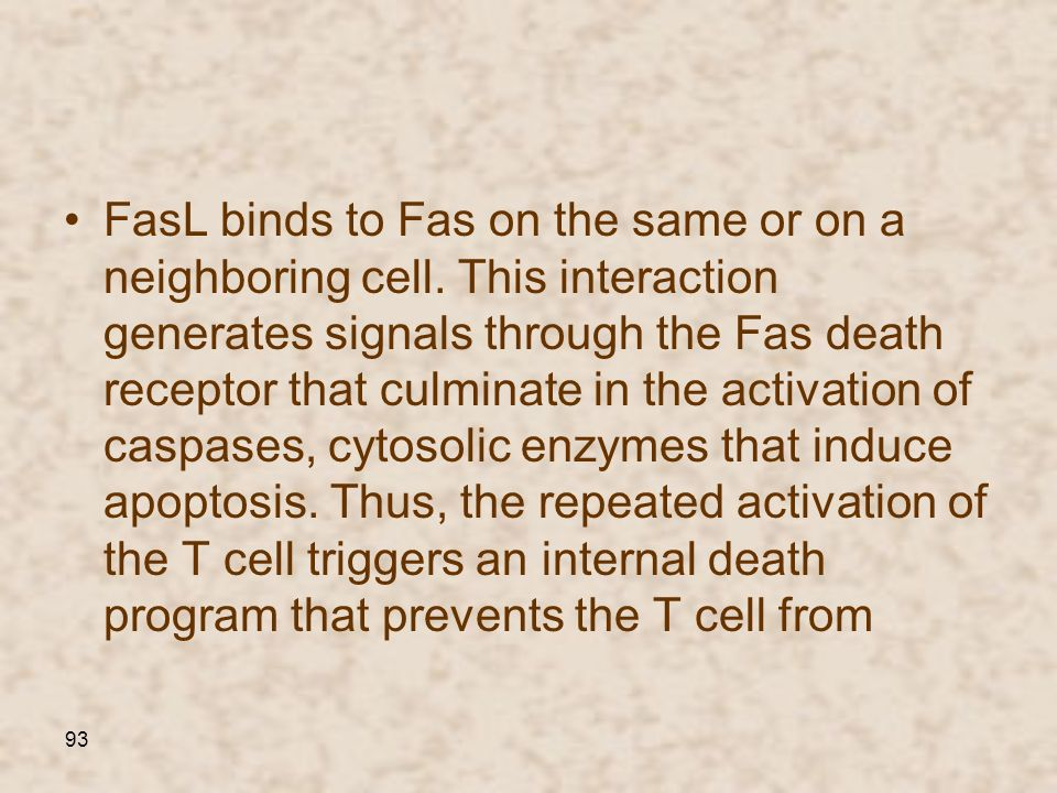 93 FasL binds to Fas on the same or on a neighboring cell. This interaction generates signals through the Fas death receptor that culminate in the act