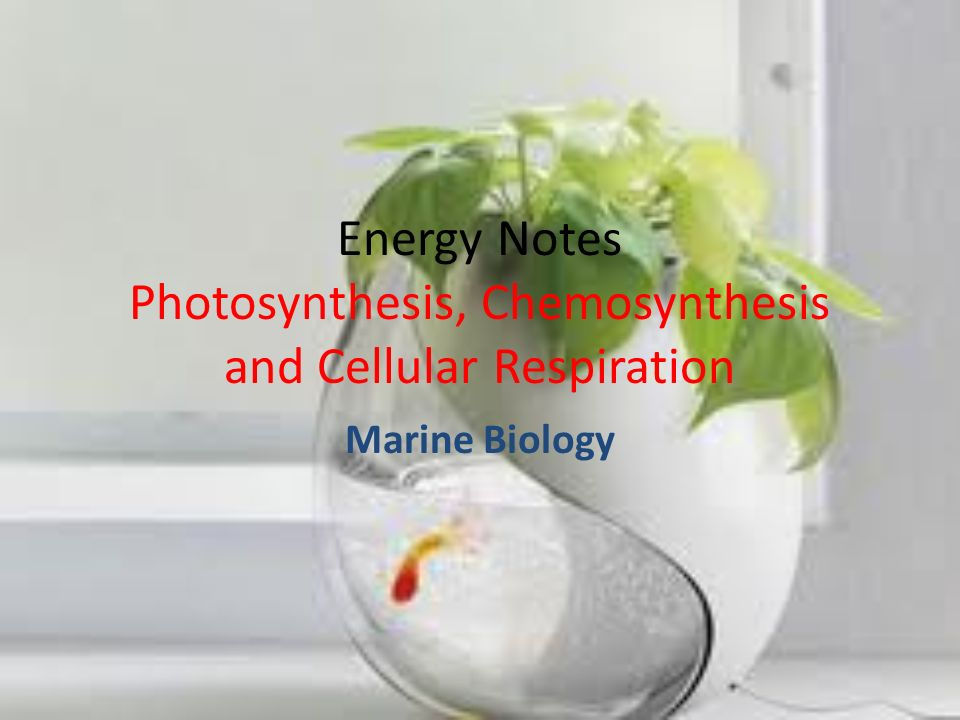 Phytoplankton and Zooplankton Watch video that discusses phytoplankton, zooplankton.video What are phytoplankton.