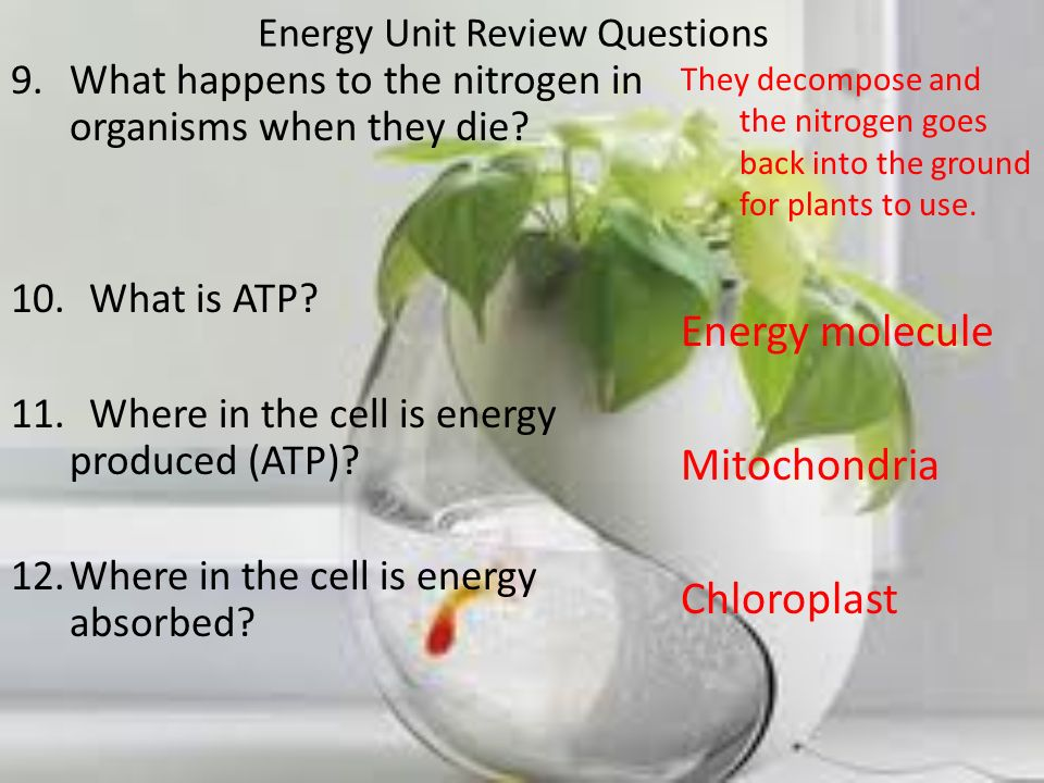 Energy Unit Review Questions 9.What happens to the nitrogen in organisms when they die? 10. What is ATP? 11. Where in the cell is energy produced (ATP