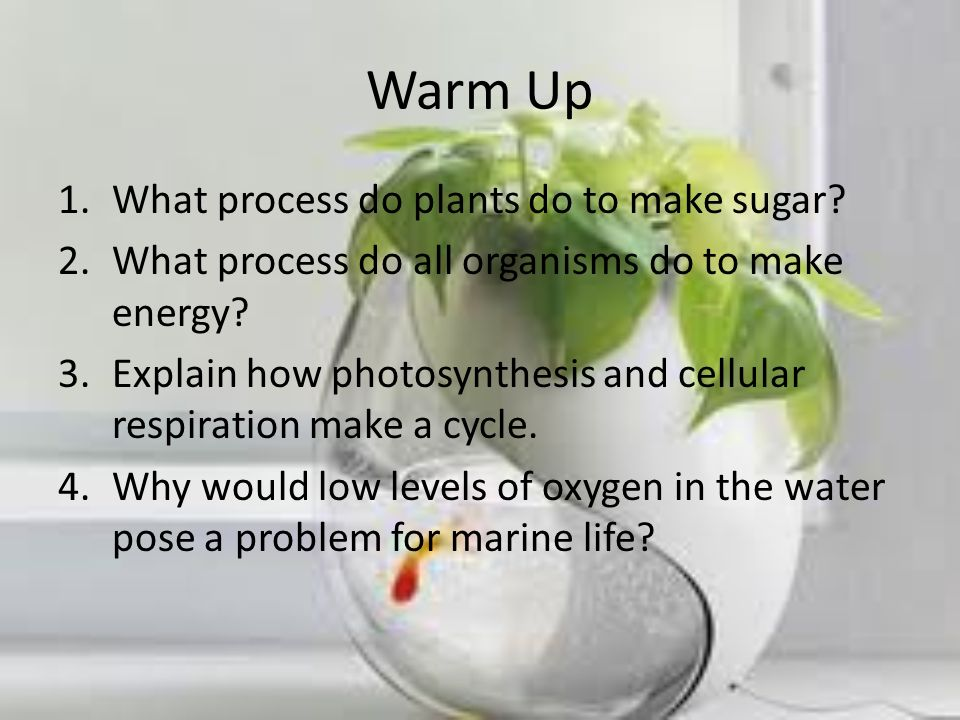 Eutrophication Watch video on eutrophication.video What is algal bloom.