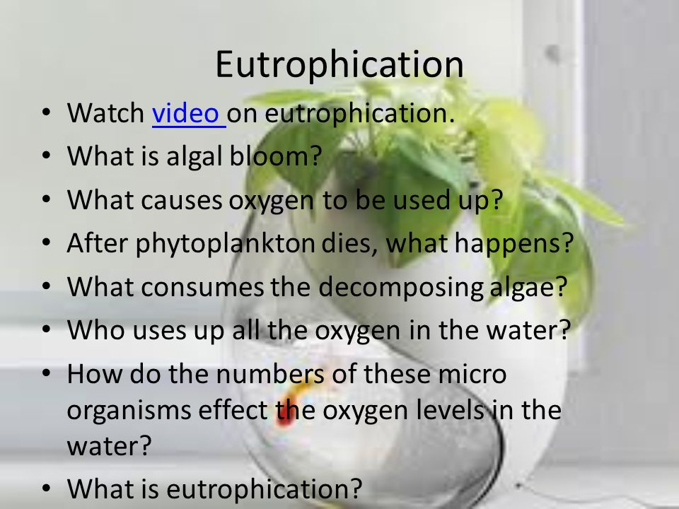 Eutrophication Watch video on eutrophication.video What is algal bloom? What causes oxygen to be used up? After phytoplankton dies, what happens? What