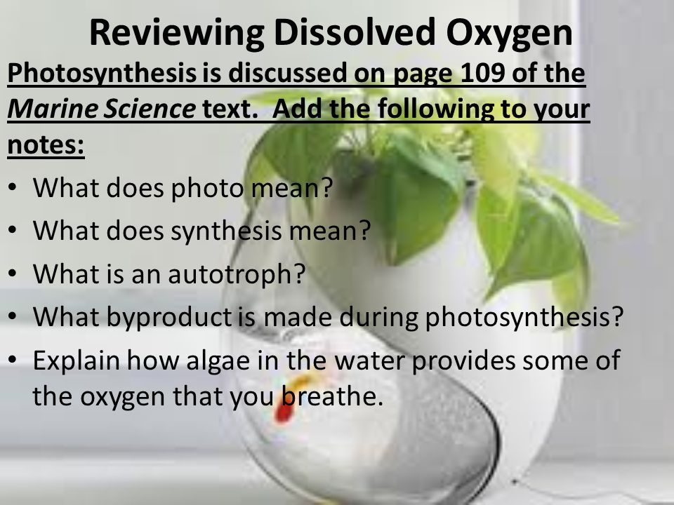 Reviewing Dissolved Oxygen Photosynthesis is discussed on page 109 of the Marine Science text. Add the following to your notes: What does photo mean?