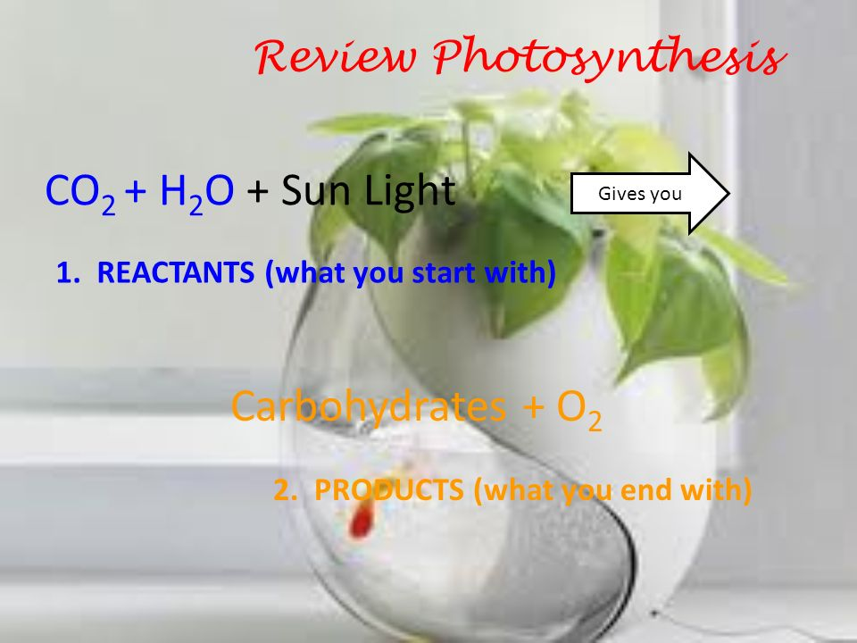 Review Photosynthesis CO 2 + H 2 O + Sun Light Gives you Carbohydrates + O 2 1. REACTANTS (what you start with) 2. PRODUCTS (what you end with)