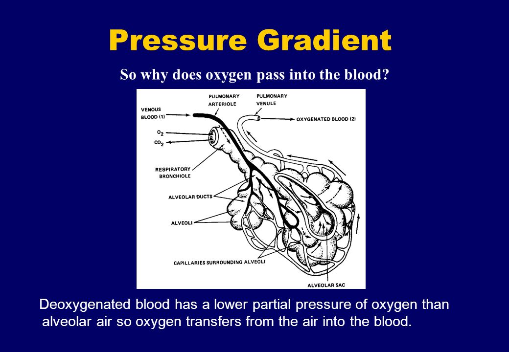 So why does oxygen pass into the blood? Pressure Gradient Deoxygenated blood has a lower partial pressure of oxygen than alveolar air so oxygen transf