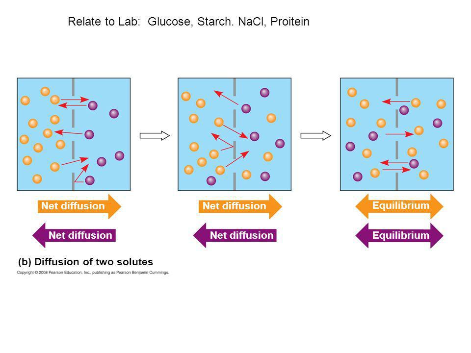 (b) Diffusion of two solutes Net diffusion Equilibrium Relate to Lab: Glucose, Starch. NaCl, Proitein