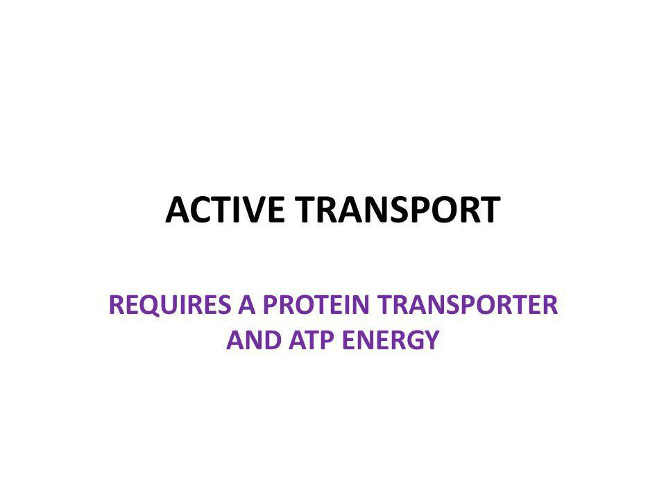 ACTIVE TRANSPORT REQUIRES A PROTEIN TRANSPORTER AND ATP ENERGY