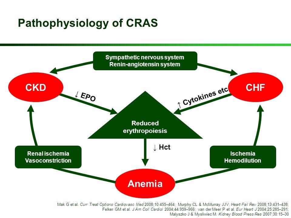 Pathophysiology of CRAS Anemia Reduced erythropoiesis Sympathetic nervous system Renin-angiotensin system Renal ischemia Vasoconstriction Ischemia Hem