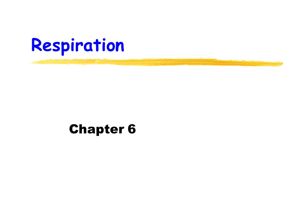 Respiration Chapter 6