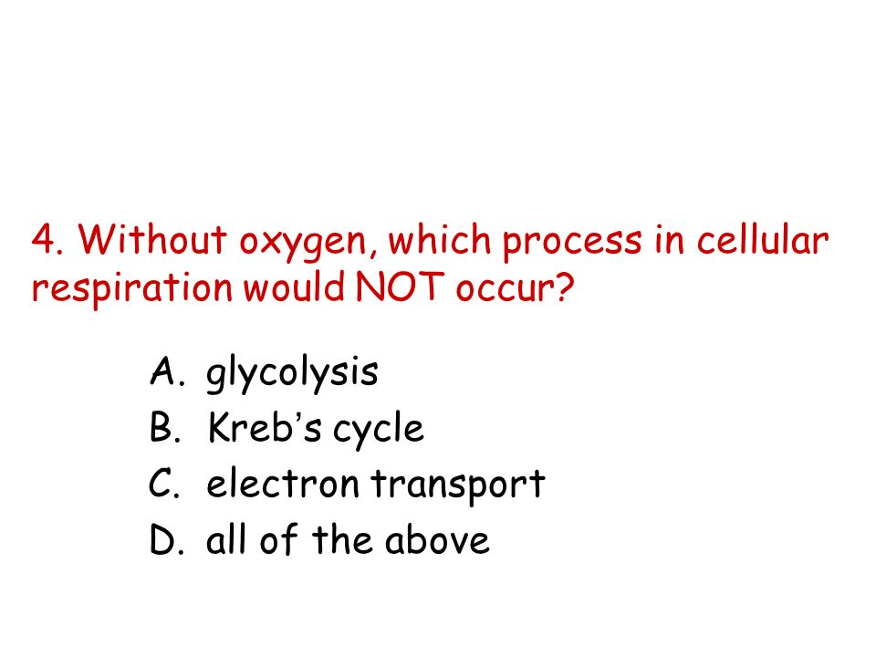 4. Without oxygen, which process in cellular respiration would NOT occur? A.glycolysis B.Krebs cycle C.electron transport D.all of the above