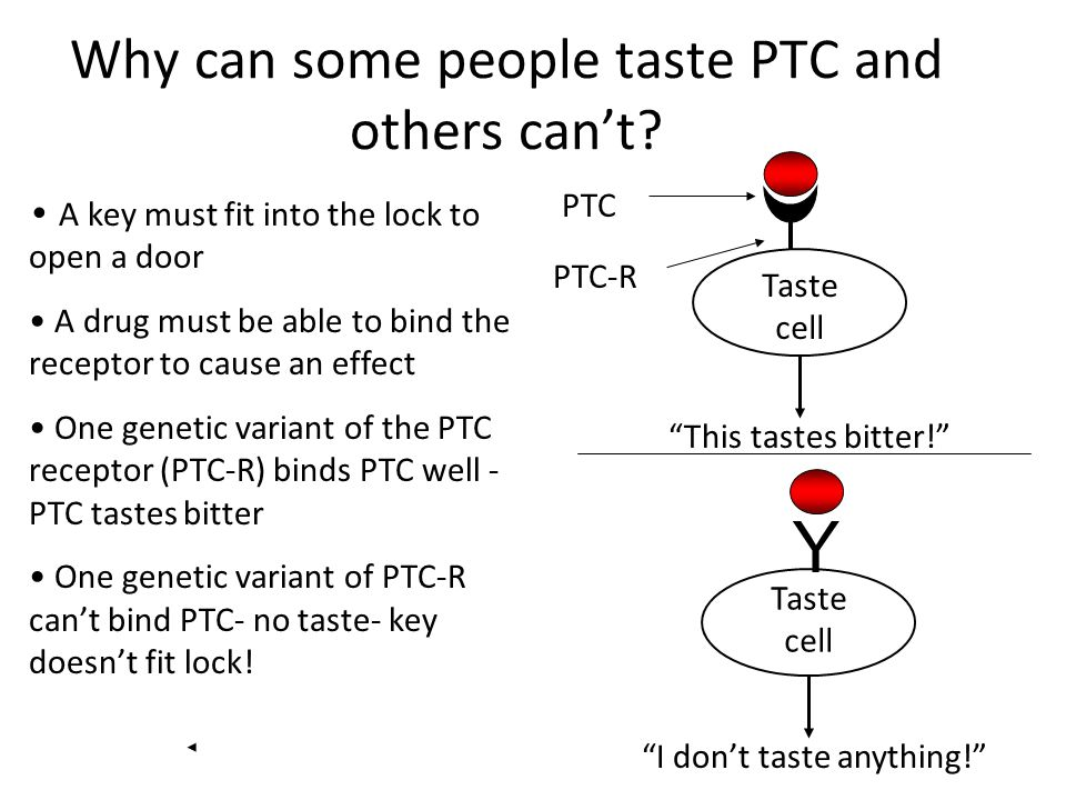 Why can some people taste PTC and others cant? A key must fit into the lock to open a door A drug must be able to bind the receptor to cause an effect