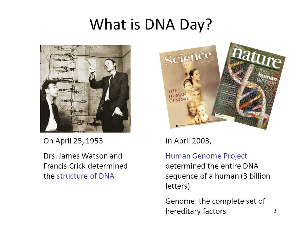 3 On April 25, 1953 Drs. James Watson and Francis Crick determined the structure of DNA In April 2003, Human Genome Project determined the entire DNA