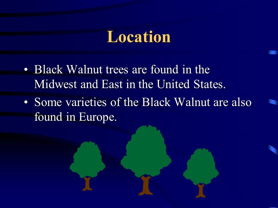 Location Black Walnut trees are found in the Midwest and East in the United States.Black Walnut trees are found in the Midwest and East in the United