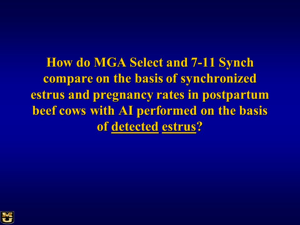 How do MGA Select and 7-11 Synch compare on the basis of synchronized estrus and pregnancy rates in postpartum beef cows with AI performed on the basi