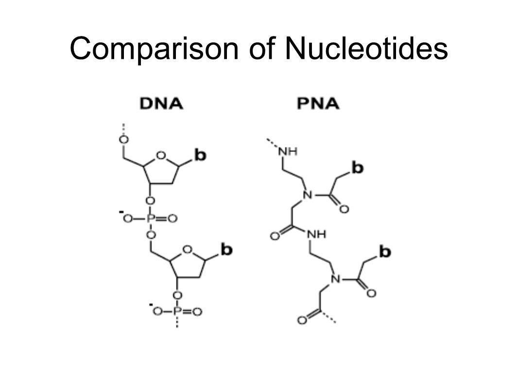Comparison of Nucleotides