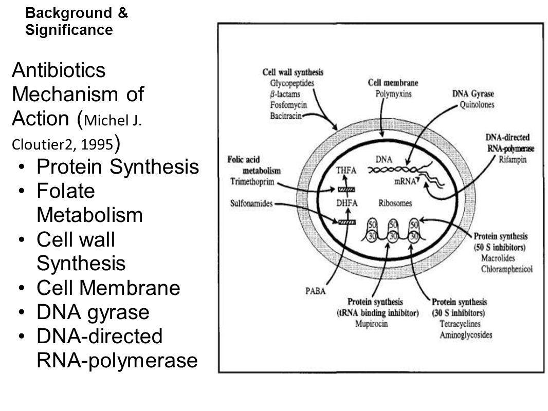 Background and Significance Mechanisms of Antibiotic Resistance ( Morris et al, 1995 ) Antibiotic modification by bacterial enzymes Preventing the antibiotic from entering the cell or pumping it out (efflux) faster than it can flow in.