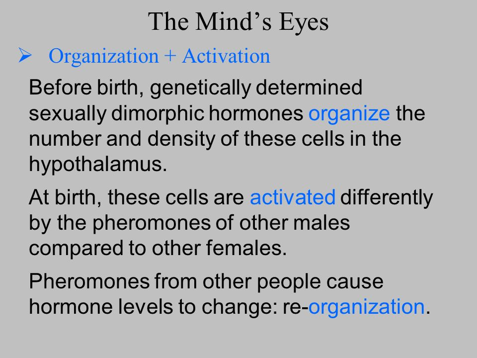 The Minds Eyes Organization + Activation Before birth, genetically determined sexually dimorphic hormones organize the number and density of these cel