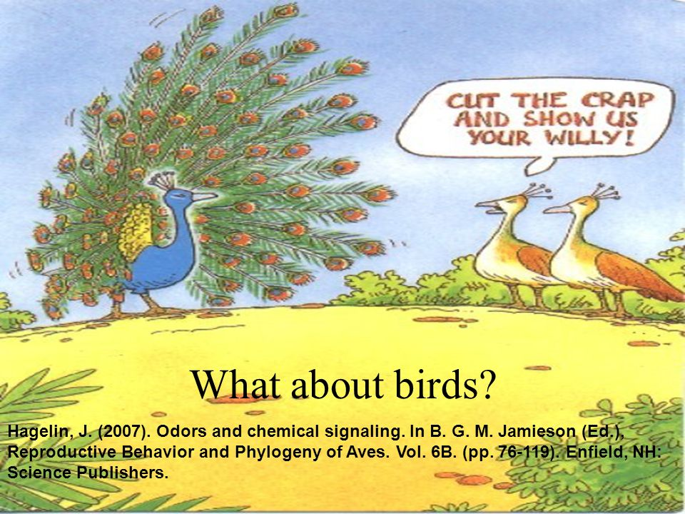 What about birds? Hagelin, J. (2007). Odors and chemical signaling. In B. G. M. Jamieson (Ed.), Reproductive Behavior and Phylogeny of Aves. Vol. 6B.