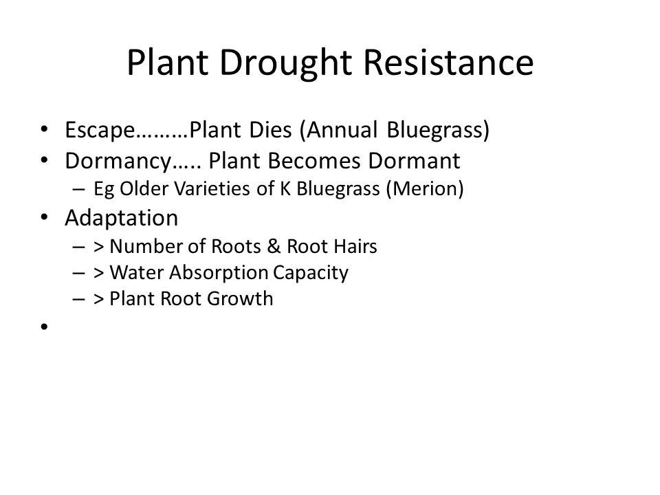 Plant Drought Resistance Escape………Plant Dies (Annual Bluegrass) Dormancy….. Plant Becomes Dormant – Eg Older Varieties of K Bluegrass (Merion) Adaptat