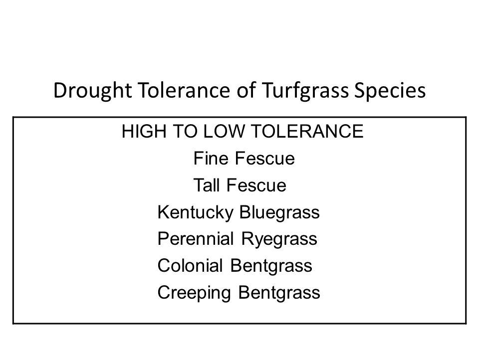 Drought Tolerance of Turfgrass Species HIGH TO LOW TOLERANCE Fine Fescue Tall Fescue Kentucky Bluegrass Perennial Ryegrass Colonial Bentgrass Creeping